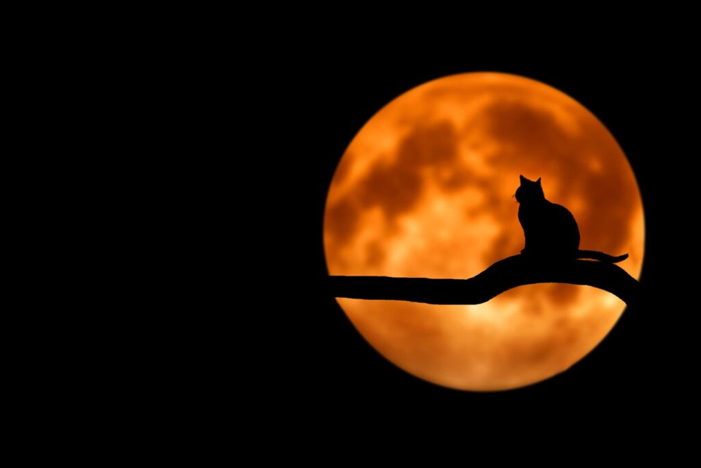 full moon cat